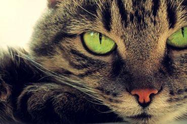 """Биологи из """"Техниона"""": кошки могут помочь в разработке противовирусных препаратов для людей"""